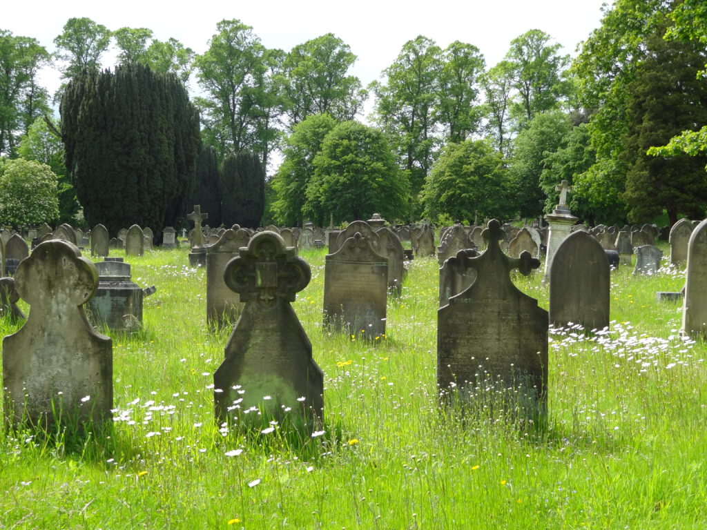 Photo of grave stones amongst wildflowers