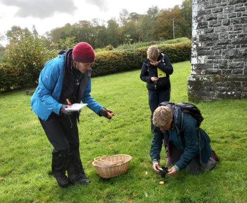 Fungi session in Beulah, Powys.