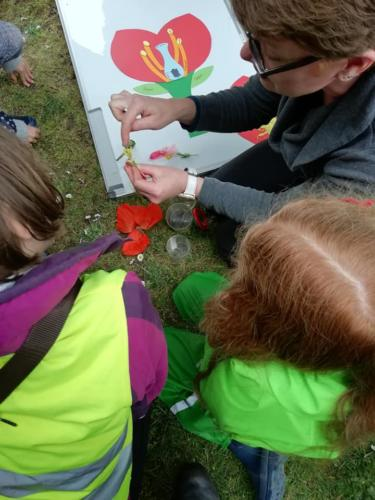 Learning about the parts of plants at a home educators session in Shrewsbury, Shropshire.