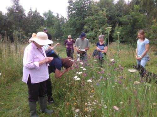 Identifying wildflowers at a natural burial ground near Leominster, Herefordshire.
